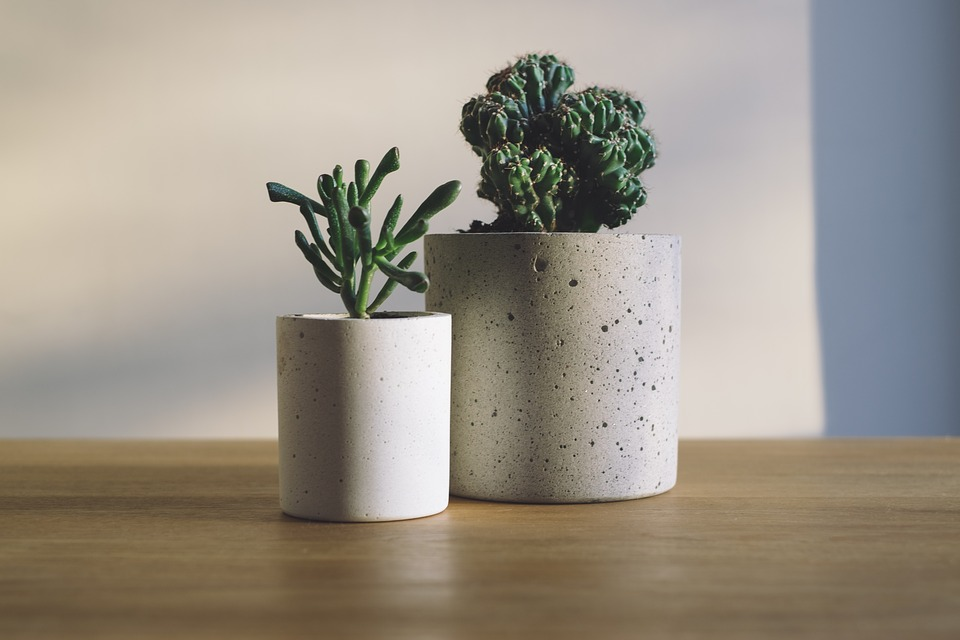 Make your house smell good-house plants